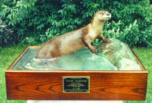 1st Place and Best Fur-Bearing Mammal 1993 ITA Competition.